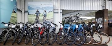 Fahrrad Schwan